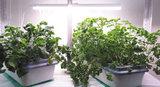 Быть здоровым и бодрым помогут домашние грядки и проращиватели семян «Здоровья КЛАД»