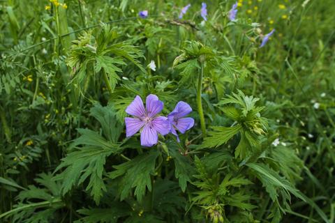 Травы для лечения и профилактики