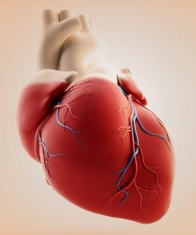 Боли в сердце, тахикардия, брадикардия – виновники глисты