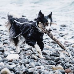 HURTTA - амуниция и одежда для собак производство Финляндия!