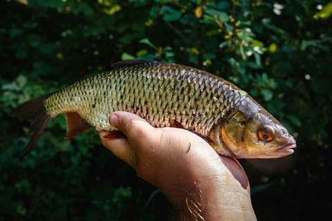 На летнюю реку с фидером. 5 советов для успешной рыбалки