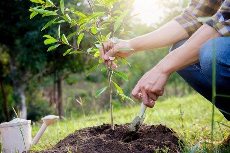 Ваш первый сад: как правильно посадить саженцы весной.