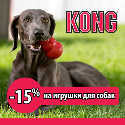 Скидка 15% на игрушки Kong для собак