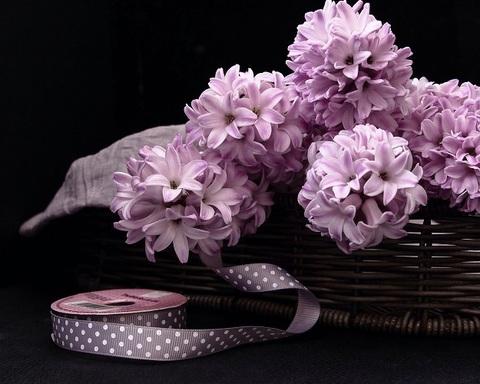 Азбука цветов или какие цветы дарить