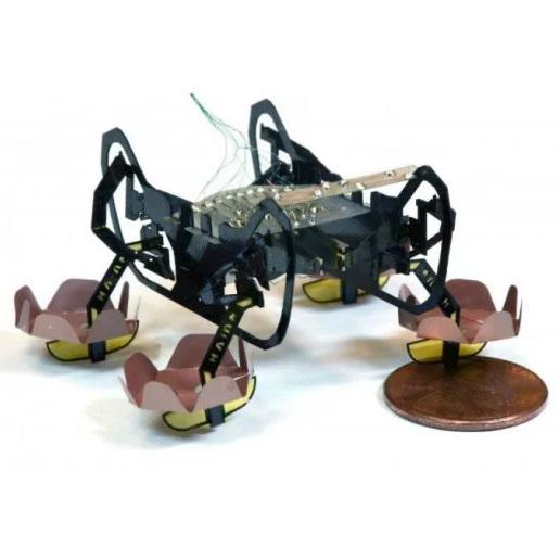 Гарвард представил ныряющего робота-таракана