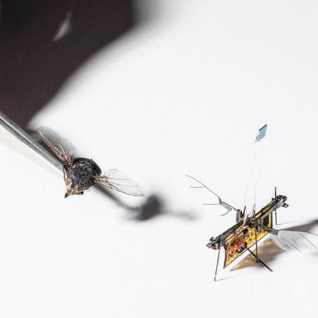 Полет кибермухи обеспечивает лазер