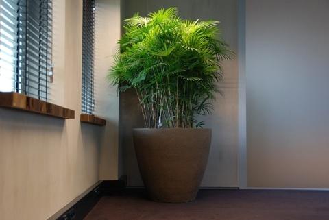 Комнатные растения, которые НЕ ТРЕБОВАТЕЛЬНЫ К ОСВЕЩЕНИЮ.