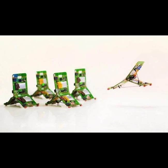 Роботизированные муравьи помогут жертвам катастроф