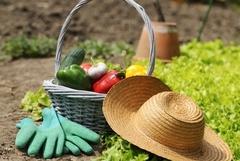Всё для дачи и сада