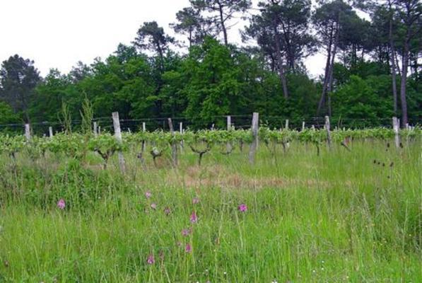 Вино недели с 13 августа - Chateau Haut Peyruguet Bordeaux AOC 2017