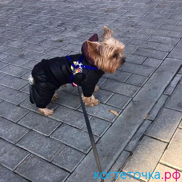 В продажу поступила утепленная одежда для собак