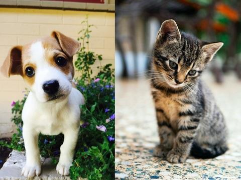 Новинки YOZHIK - щётки для ухода за шерстью домашних животных