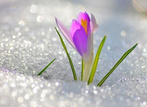 С праздником весны и красоты!!!
