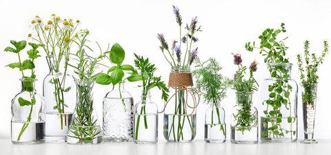 Гидролат или цветочная вода?