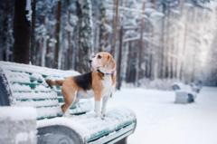 Советы владельцам собак при холодной погоде
