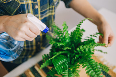 Уход в осенне-зимний период. Как помочь комнатным растениям перезимовать?