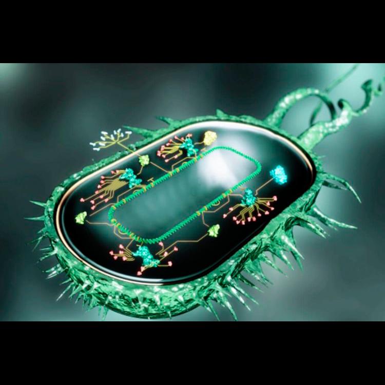 «Бактерии-киборги» синтезируют органические соединения