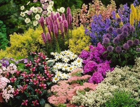 -50% на многолетние цветы, пряные травы и злаки