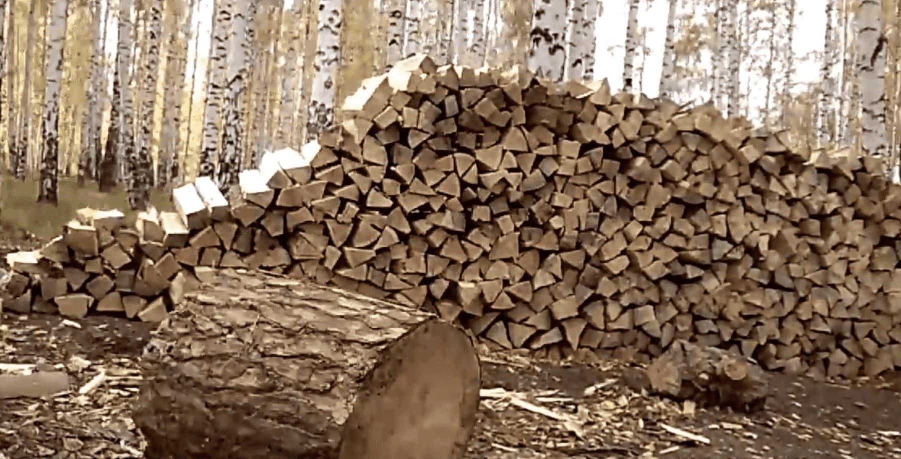 Свойства дров разных пород: показатели качества древесины