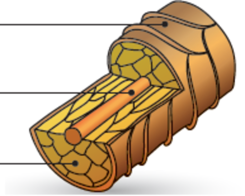 Структура волос и типы окрашивания