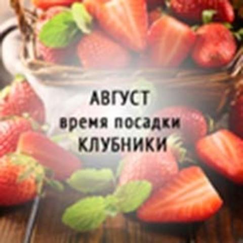 Посадка клубники (земляники) на Агроткань