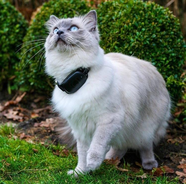 Как выбрать GPS ошейник для собаки или кошки