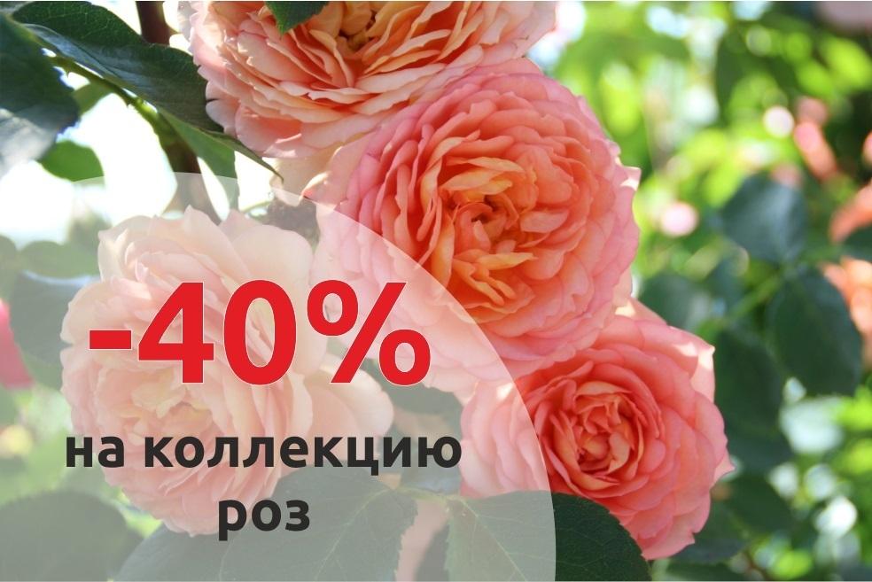 -40% НА КОЛЛЕКЦИЮ РОЗ
