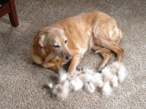 Собака сильно линеят, что делать?