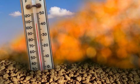 Помощь растениям в жару.