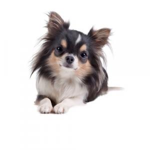 Royal Canin X-small