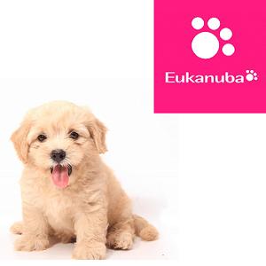 Eukanuba для щенков