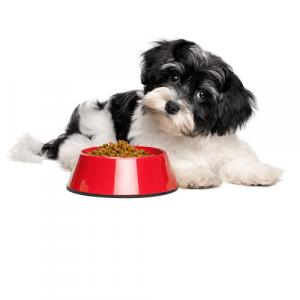 Повседневные корма для собак