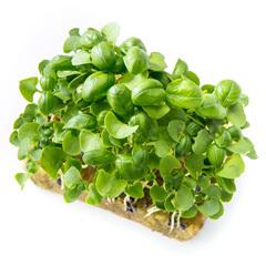 Микрозелень - семена для проращивания