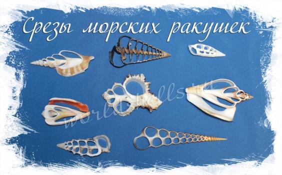 Срезы морских ракушек