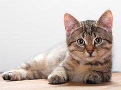 Кошкам