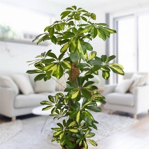 Декоративно-лиственные растения