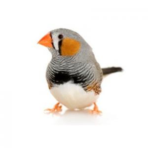 Корма для экзотических птиц