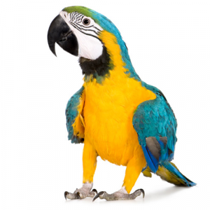Корма для крупных попугаев