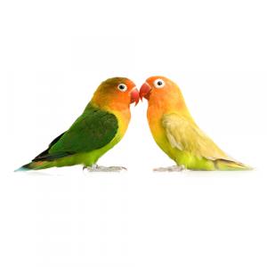 Корма для средних попугаев