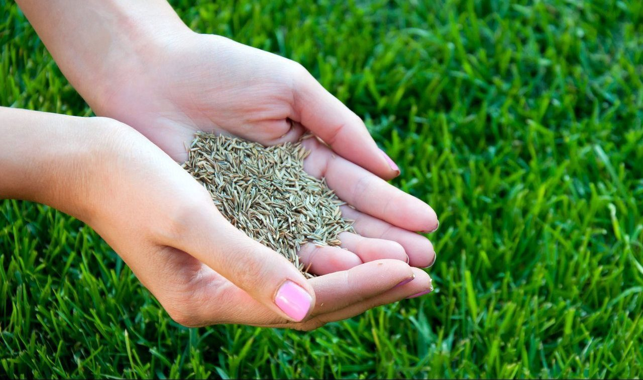 Семена газон