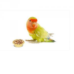 Лакомства и минеральные добавки для птиц