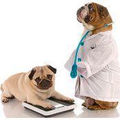 Ветеринарные диеты для собак