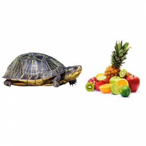 Витамины и витаминные лакомства для рыб и рептилий