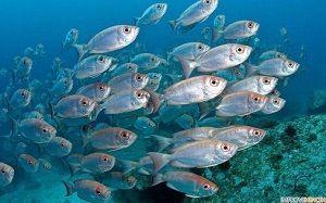 Корма для морских рыб
