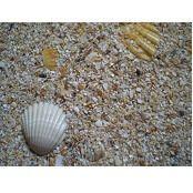 Песок и наполнители для птиц