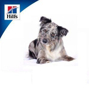 Hill's  Science Plan для пожилых собак