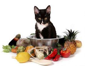 Влажные ветеринарные диеты для кошек