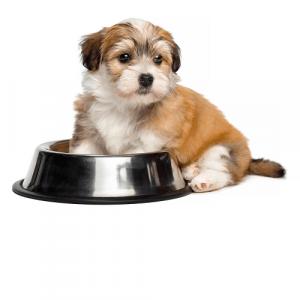 Миски Кормушки Автопоилки для собак