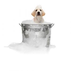 Гигиенический уход для собак