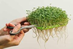 Проращиватель «Здоровья КЛАД» (универсальный) урожай